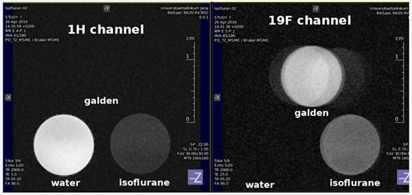 Figure 2.   9.4 T 1H and 19F images of tubes of water, Isoflurane, and Galden™ PFPE (perfluoropolyether) phantoms.   Accordingly, the water sample is bright in the 1H scan and invisible on the 19F channel; Isoflurane, with a mixture of 19F and 1H, is visible on both channels; the 100% fluorinated PFPE is invisible on the 1H channel and bright on the 19F channel.  Note that the artifacts/ghosting effect appearing for the PFPE tube is not from the coil, but rather is due to multiple 19F resonance frequencies (and a large 19F chemical shift) which causes multiple (ghost-like) images.  Localization is excellent on both channels.